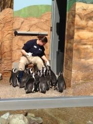 Penguin feeding!